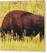 Bison In Field Wood Print