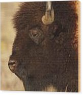 Bison In Profile Wood Print