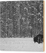 Bison In Snow Mosaic Wood Print by Barry Shaffer