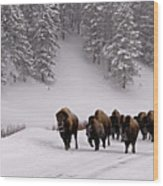 Bison In Winter Wood Print by DBushue Photography