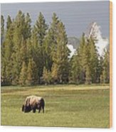 Bison In Yellowstone Wood Print