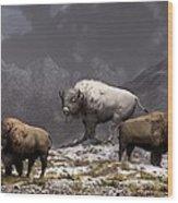 Bison King Wood Print