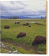 Bison-land Wood Print