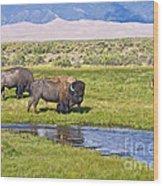 Bison On Big Spring Creek Wood Print