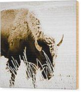 Bison Winter Wood Print