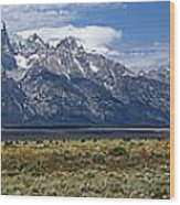Bisons Grazing Under The Grand Tetons Wood Print