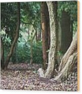 Bizarre Trees Wood Print by Angela Doelling AD DESIGN Photo and PhotoArt