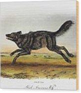 Black American Wolf Wood Print
