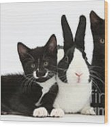 Black And Tuxedo Kittens With Dutch Wood Print