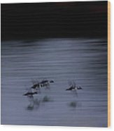 Black And White - Merganser Fliers Wood Print