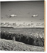 Black And White Above The Vines  Wood Print by Joshua House