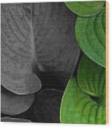 Black And White And Green Leaves Wood Print