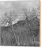 Black And White Aspen Wood Print