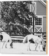 Black And White Clydesdale Grazing Wood Print