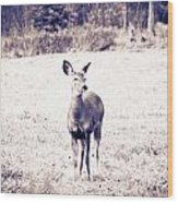 Black And White Deer Wood Print