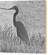 Black And White Egret  Wood Print