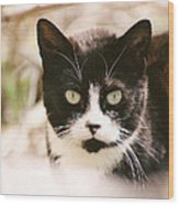 Black And White Feral Cat Wood Print