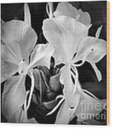 Black And White Hawaiian Ginger Flowers Wood Print