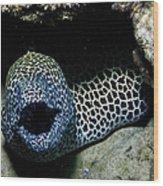 Black And White Honeycomb Moray Eel Wood Print