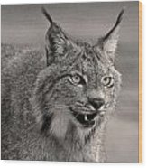 Black And White Lynx Wood Print