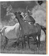 Black And White Photograph Of Montana Horses Wood Print