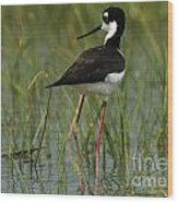 Black And White Stilt Wood Print