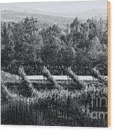 Black And White Vineyard Sunrise  Wood Print