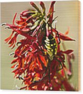 Black And Yellow Garden Spider 1 Wood Print