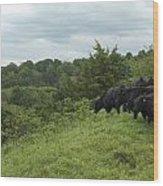 Black Angus Cattle Wood Print by Justin Guariglia