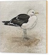 Black Backed Gull  Wood Print