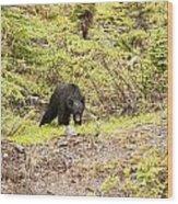 Black Bear 1899 Wood Print