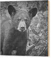 Black Bear Cub In A Pine Tree Wood Print