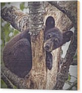 Black Bear Cub No 3224 Wood Print