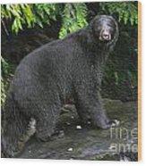 Black Bear Neets Bay Alaska Wood Print