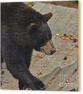 Black Bear Stepping Up In The World Wood Print
