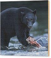 Black Bear With Salmon Carcass Wood Print