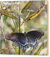Black Beauty In The Bush Wood Print
