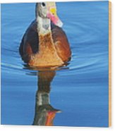 Black-bellied Whistling-duck Wood Print