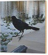 Black Bird Wood Print