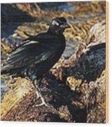 Black Bird With Yellow Eyes Wood Print