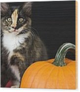 Black Calico Kitten With Pumpkin Wood Print
