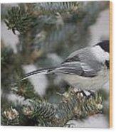 Black-capped Chickadee, Poecile Wood Print