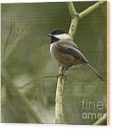 Black-capped Chickadee With Branch Bokeh Wood Print