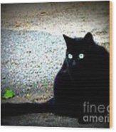 Black Cat Beauty Wood Print