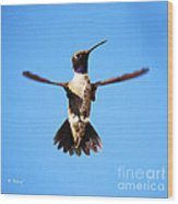Black-chinned Hummingbird Flying Wood Print