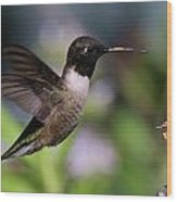 Black Chinned Hummingbird Wood Print