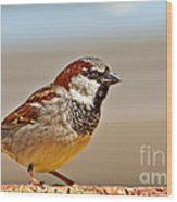 Black-chinned Sparrow Wood Print