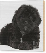 Black Cockerpoo Puppy Wood Print