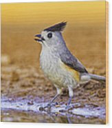 Black Crested Titmouse Wood Print