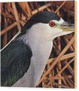 Black-crowned Night Heron Wood Print